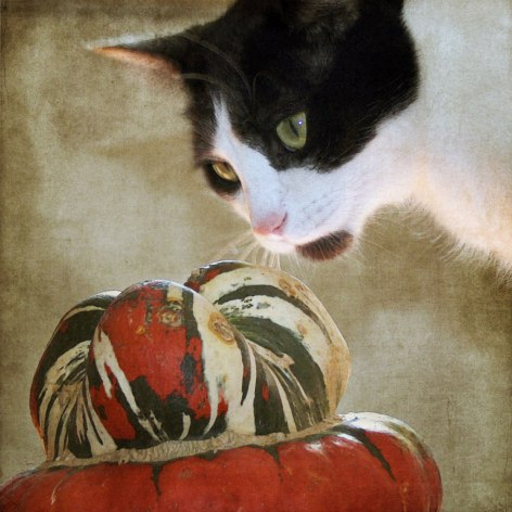 Orestes and the Turban Squash