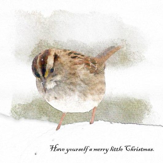 Sparrow3-copy