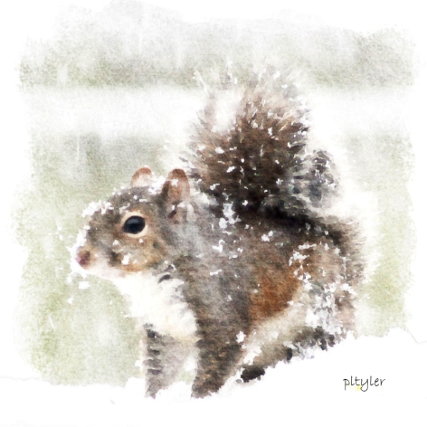 Squirrel5