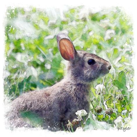 Bunny-copy