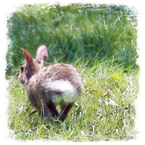Bunny2-copy