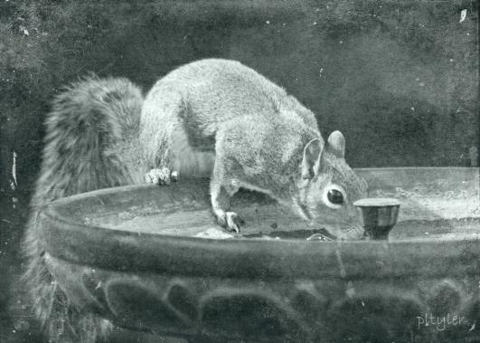 VintageSquirrel