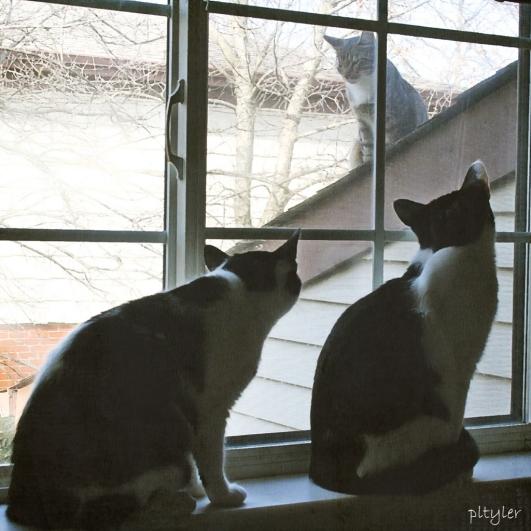 Roofcat