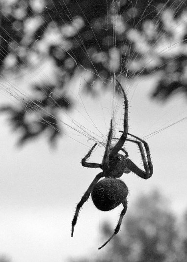 Spider8